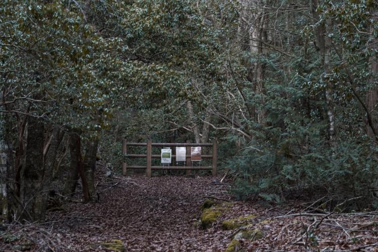 aokigahara-19