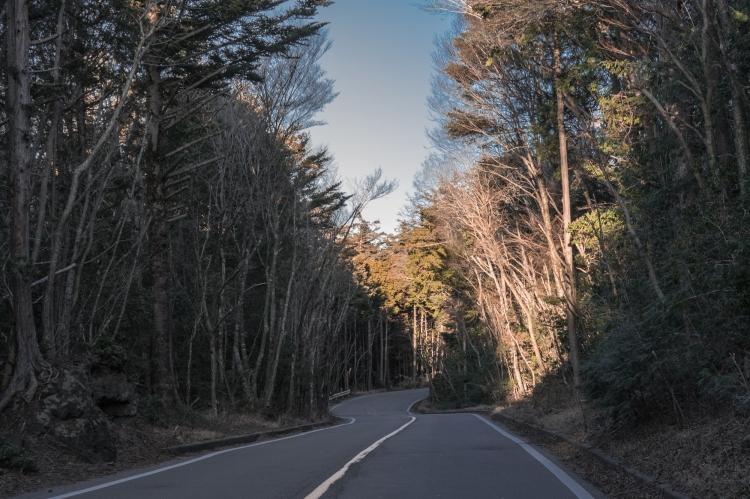 aokigahara-3